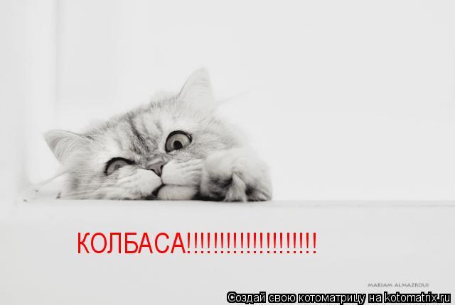 Котоматрица: КОЛБАСА!!!!!!!!!!!!!!!!!!!!