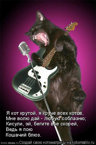 Котоматрица: Я кот крутой, я круче всех котов, Мне волю дай - любую соблазню; Кисули, эй, бегите все скорей, Ведь я пою Кошачий блюз.