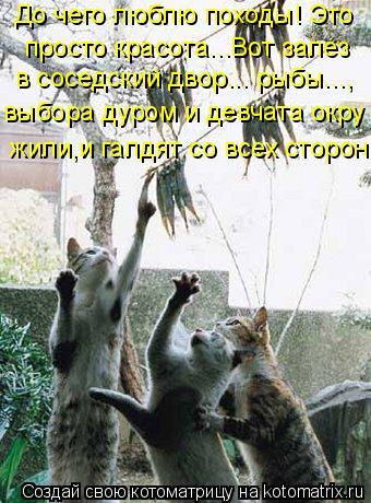 Котоматрица: До чего люблю походы! Это просто красота...Вот залез в соседский двор... рыбы..., выбора дуром и девчата окру жили,и галдят со всех сторон