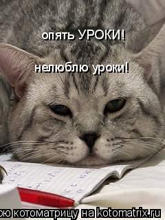 Котоматрица: опять УРОКИ! нелюблю уроки!