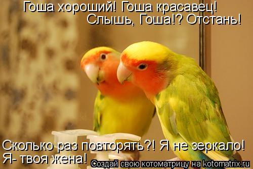 Котоматрица: Гоша хороший! Гоша красавец! Слышь, Гоша!? Отстань! Сколько раз повторять?! Я не зеркало! Я- твоя жена!
