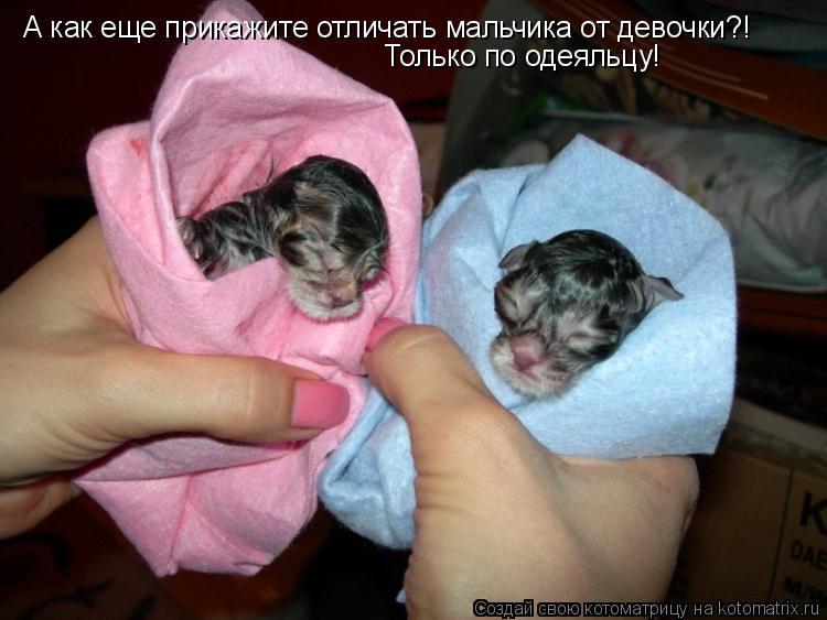 Котоматрица: А как еще прикажите отличать мальчика от девочки?! Только по одеяльцу!