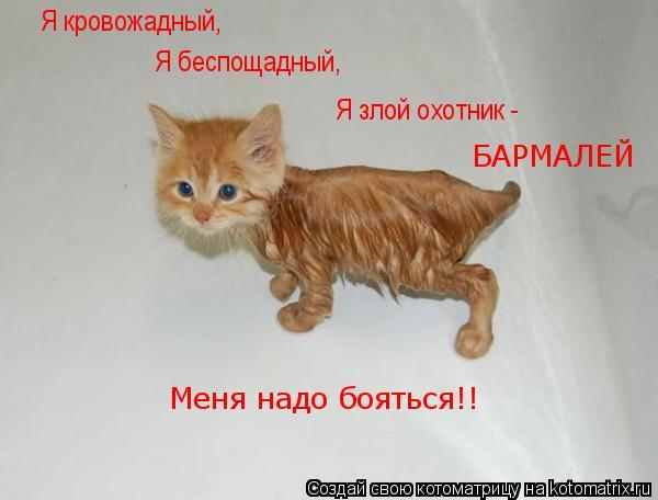 Котоматрица: Я кровожадный, Я беспощадный, Я злой охотник -  БАРМАЛЕЙ Меня надо бояться!!