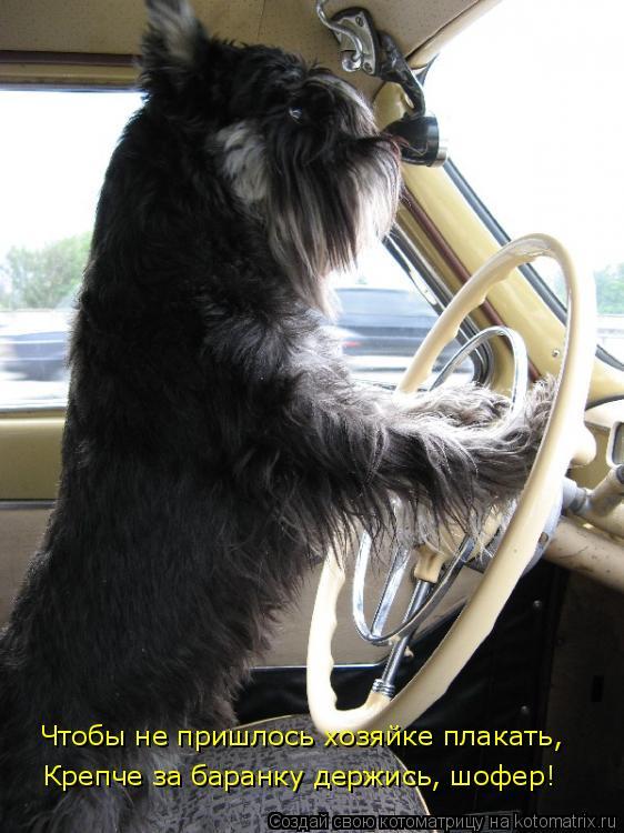 Котоматрица: Чтобы не пришлось хозяйке плакать, Чтобы не пришлось хозяйке плакать, Крепче за баранку держись, шофер!