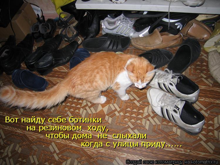 Котоматрица: Вот найду себе ботинки на резиновом  ходу, чтобы дома  не  слыхали когда с улицы приду......