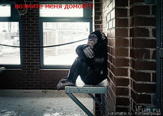 Котоматрица: возмите меня домой!!!