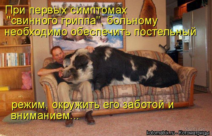 """Котоматрица: При первых симптомах  """"свинного гриппа"""", больному  необходимо обеспечить постельный   режим, окружить его заботой и вниманием..."""