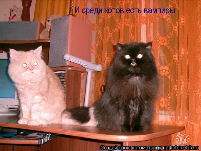Котоматрица: И среди котов есть вампиры