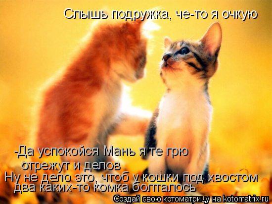 Котоматрица: Слышь подружка, че-то я очкую  -Да успокойся Мань я те грю отрежут и делов Ну не дело это, чтоб у кошки под хвостом два каких-то комка болталос