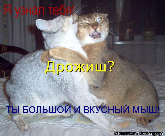 Котоматрица: Я узнал тебя!  Дрожиш?  ТЫ БОЛЬШОЙ И ВКУСНЫЙ МЫШ! ТЫ БОЛЬШОЙ И ВКУСНЫЙ МЫШ! ТЫ БОЛЬШОЙ И ВКУСНЫЙ МЫШ!