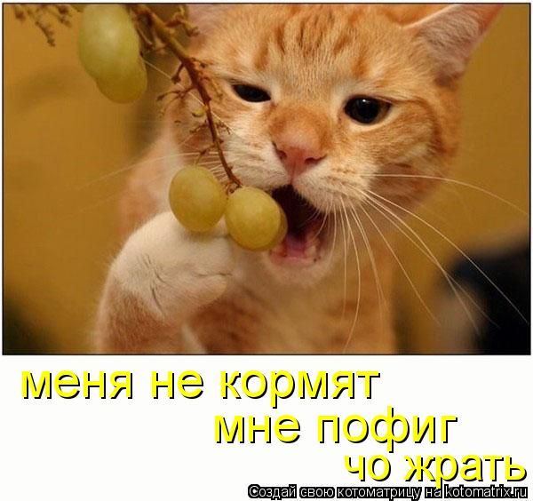 Котоматрица: меня не кормят мне пофиг  чо жрать