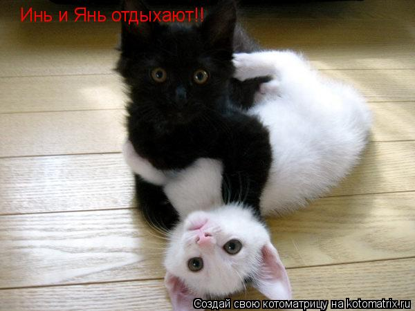 Котоматрица: Инь и Янь отдыхают!!