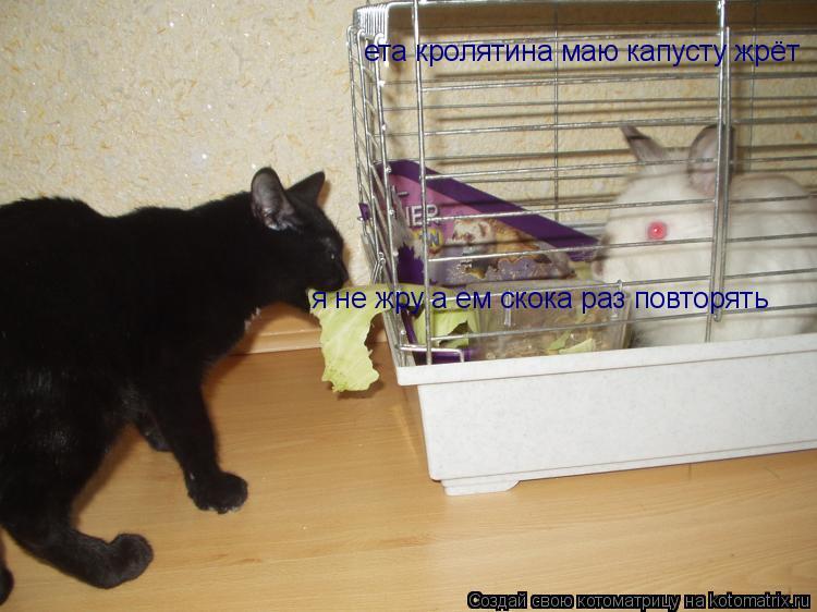 Котоматрица: ета кролятина маю капусту жрёт я не жру а ем скока раз повторять