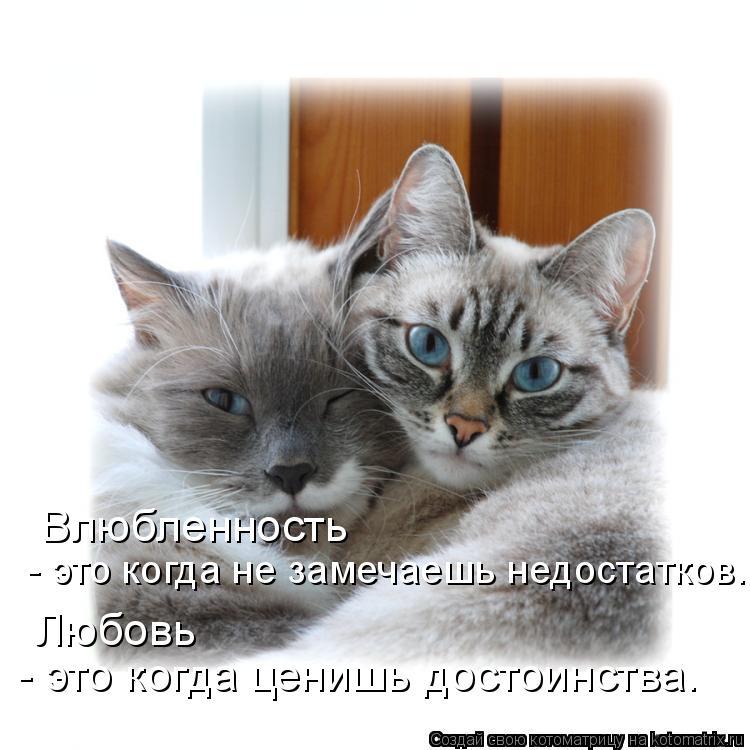 Котоматрица: Влюбленность  - это когда не замечаешь недостатков. Любовь - это когда ценишь достоинства. - это когда ценишь достоинства. Любовь