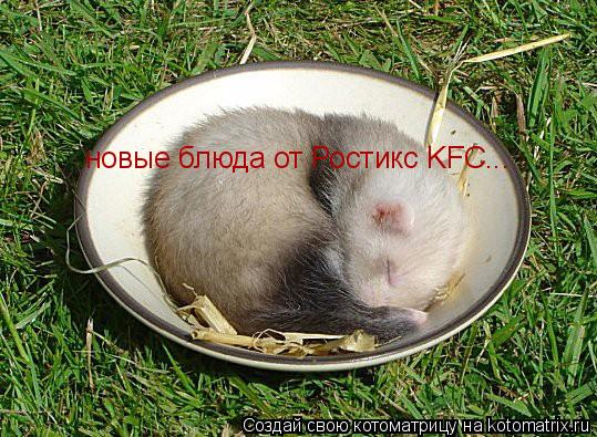 Котоматрица: новые блюда от Ростикс KFC...