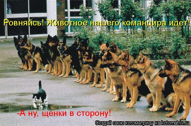 Котоматрица: Ровняйсь! Животное нашего командира идет! -А ну, щенки в сторону!