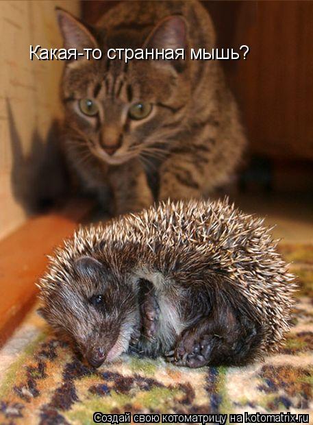 Котоматрица: Какая-то странная мышь?