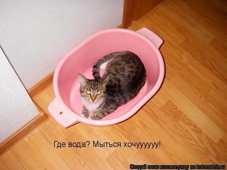 Котоматрица: Где вода? Мыться хочуууууу!