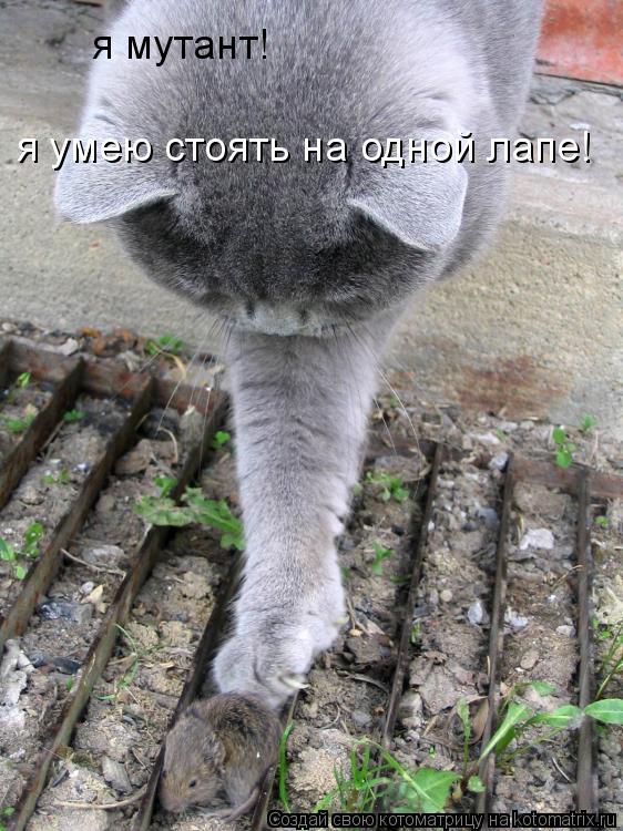Котоматрица: я мутант! я умею стоять на одной лапе!