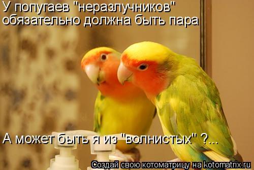 """Котоматрица: У попугаев """"неразлучников""""  обязательно должна быть пара А может быть я из """"волнистых"""" ?..."""