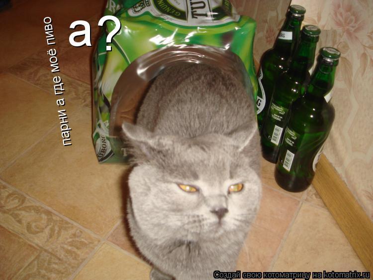 Котоматрица: парни а где моё пиво   а ?