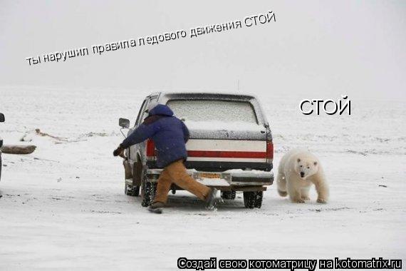 Котоматрица: СТОЙ ты нарушил правила ледового движения СТОЙ