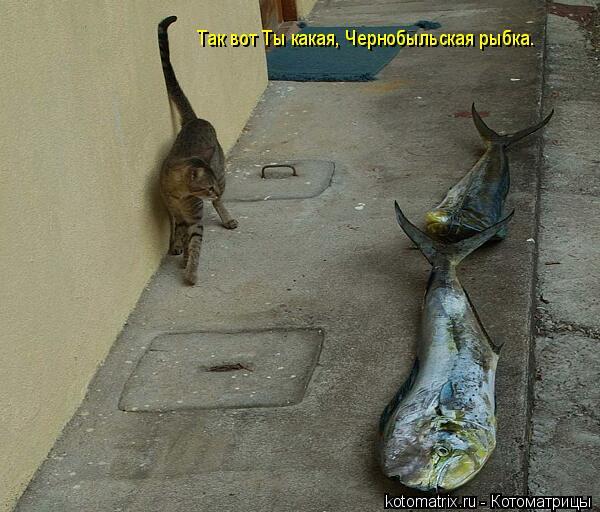 Котоматрица: Так вот Ты какая, Чернобыльская рыбка.