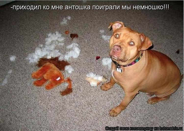 Котоматрица: -приходил ко мне антошка поиграли мы немношко!!!