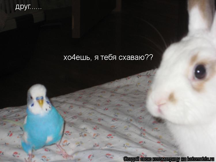 Котоматрица: друг...... хо4ешь, я тебя схаваю??