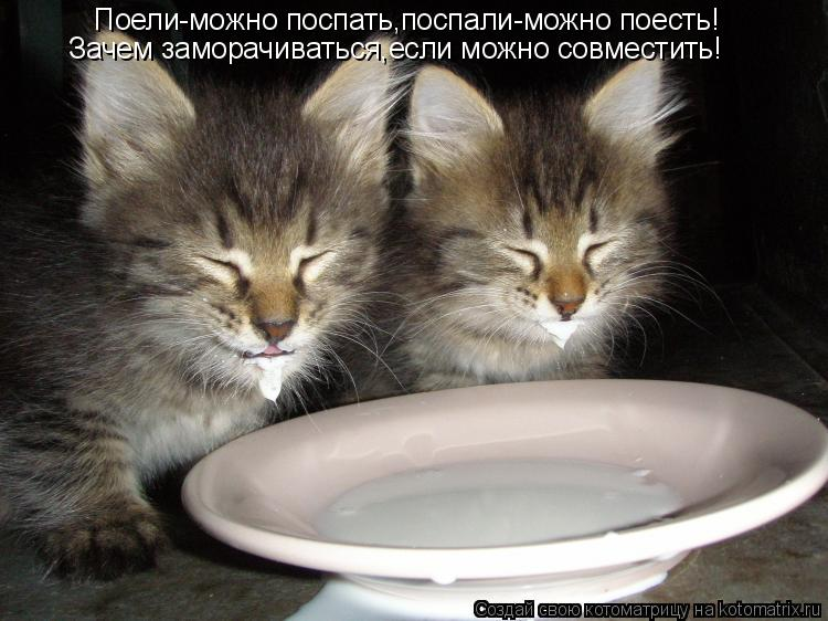 Котоматрица: Поели-можно поспать,поспали-можно поесть! Зачем заморачиваться,если можно совместить!