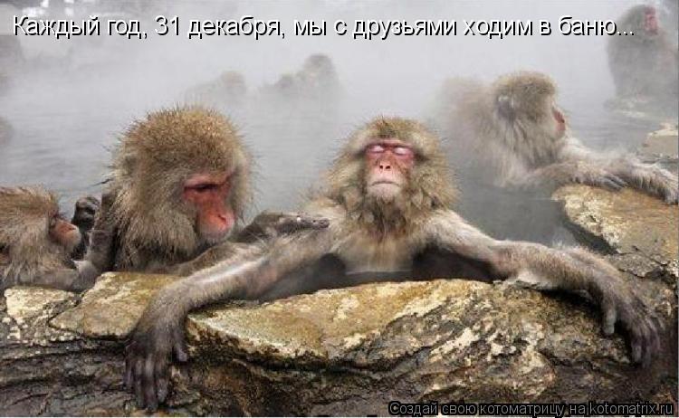 Котоматрица: Каждый год, 31 декабря, мы с друзьями ходим в баню...