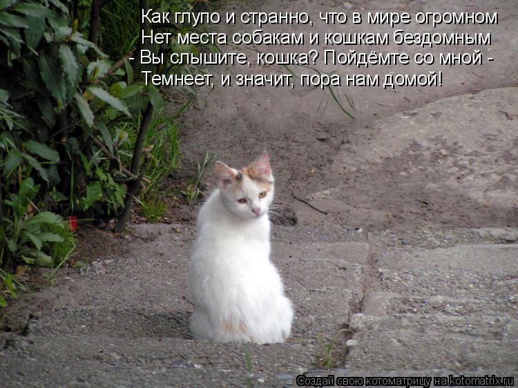 Котоматрица: Как глупо и странно, что в мире огромном Нет места собакам и кошкам бездомным - Вы слышите, кошка? Пойдёмте со мной - Темнеет, и значит, пора на