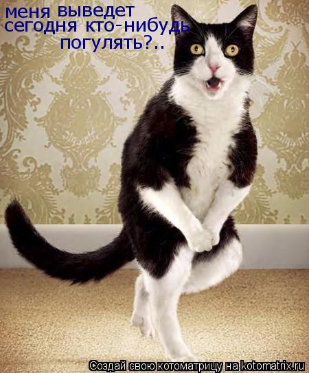 Котоматрица: меня выведет сегодня кто-нибудь погулять?..