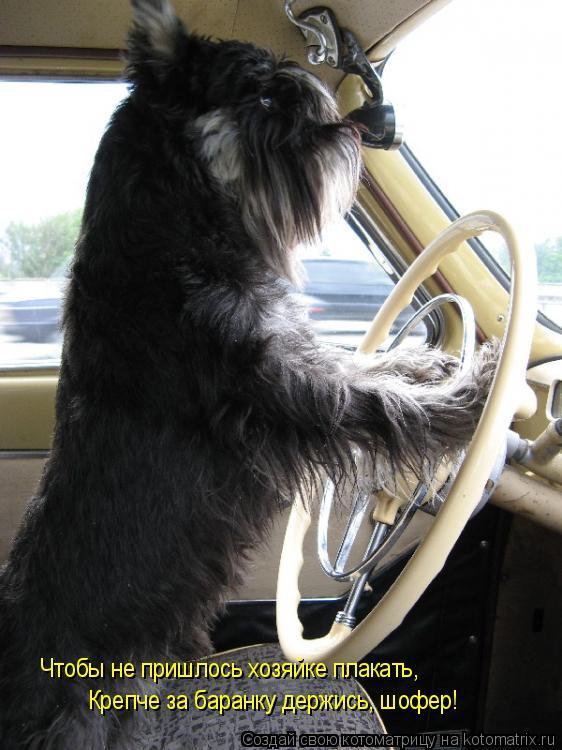 Котоматрица: Чтобы не пришлось хозяйке плакать, Крепче за баранку держись, шофер!