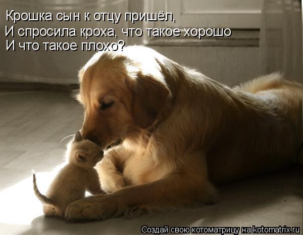 Котоматрица: Крошка сын к отцу пришёл, И спросила кроха, что такое хорошо  И что такое плохо?