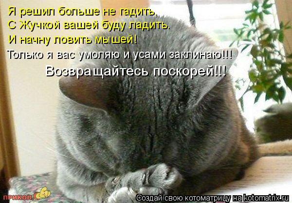 Котоматрица: Я решил больше не гадить,  С Жучкой вашей буду ладить. И начну ловить мышей! Только я вас умоляю и усами заклинаю!!! Возвращайтесь поскорей!!!