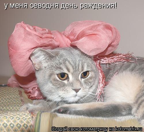 Котоматрица: у меня севодня день раждения!