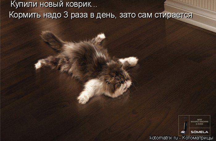 Котоматрица: Купили новый коврик... Кормить надо 3 раза в день, зато сам стирается
