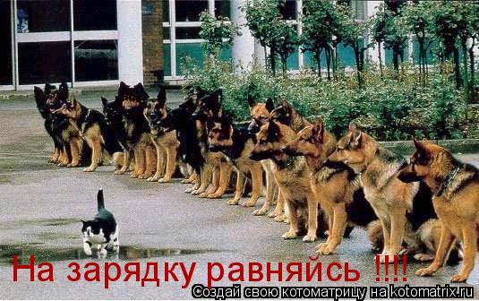 Котоматрица: На зарядку равняйсь !!!!