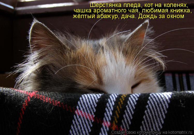 Котоматрица: Шерстянка пледа, кот на коленях,  чашка ароматного чая, любимая книжка, жёлтый абажур, дача. Дождь за окном