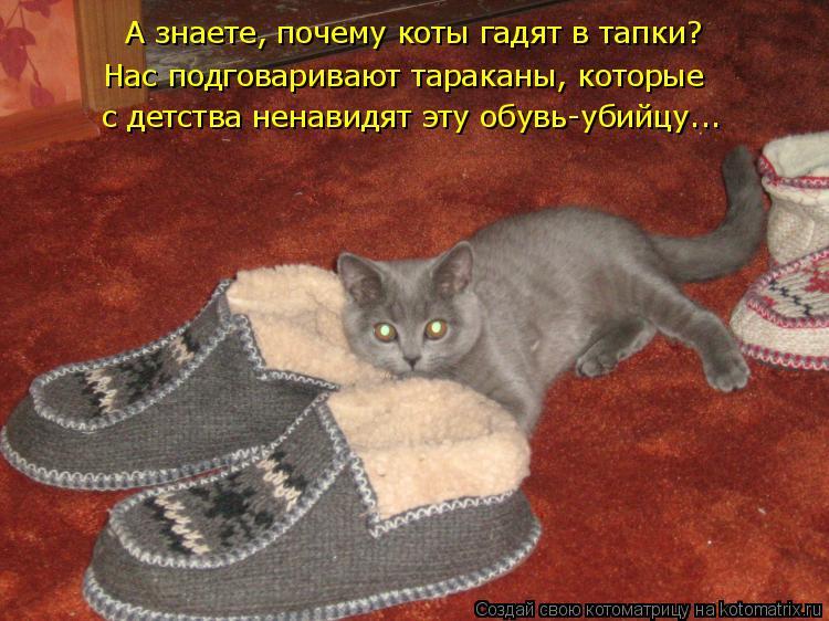 Котоматрица: А знаете, почему коты гадят в тапки? Нас подговаривают тараканы, которые  с детства ненавидят эту обувь-убийцу...