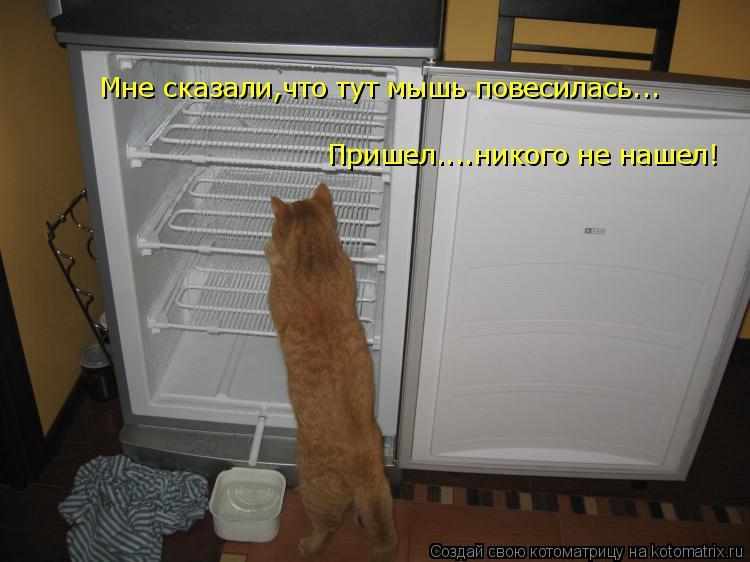 Котоматрица: Пришел....никого не нашел! Мне сказали,что тут мышь повесилась...