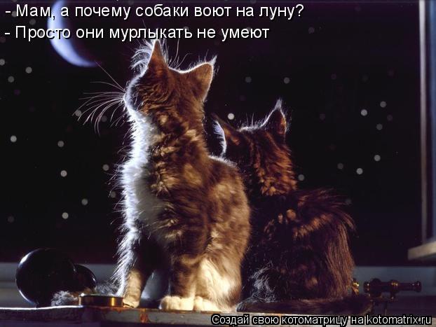 Котоматрица: - Просто они мурлыкать не умеют - Мам, а почему собаки воют на луну?