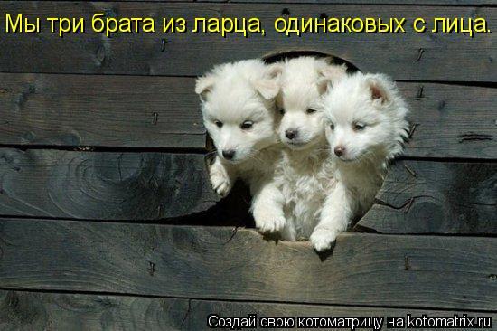 Котоматрица: Мы три брата из ларца, одинаковых с лица.