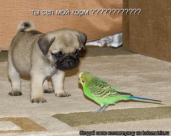 Котоматрица: ты сел мой корм ????????????