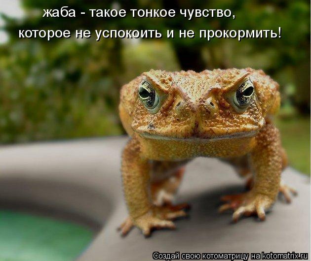 Котоматрица: жаба - такое тонкое чувство,  которое не успокоить и не прокормить!