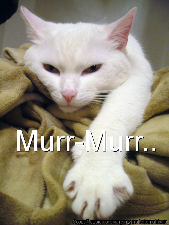 Котоматрица: Murr-Murr..