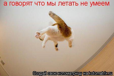 Котоматрица: а говорят что мы летать не умеем