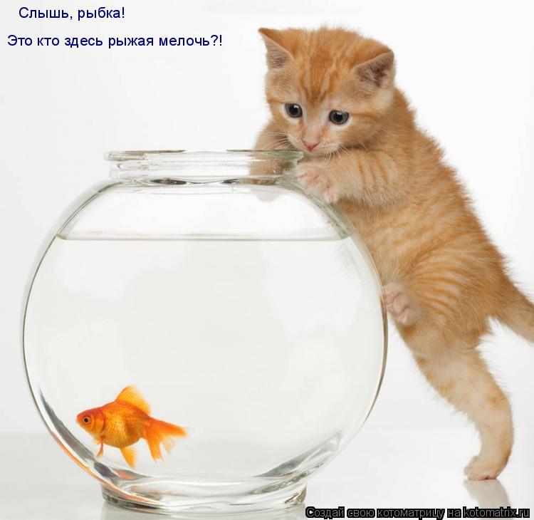 Котоматрица: Слышь, рыбка! Это кто здесь рыжая мелочь?!