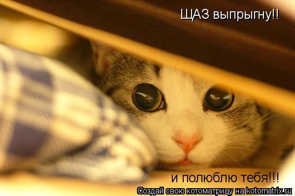 Котоматрица: ЩАЗ выпрыгну!! и полюблю тебя!!!